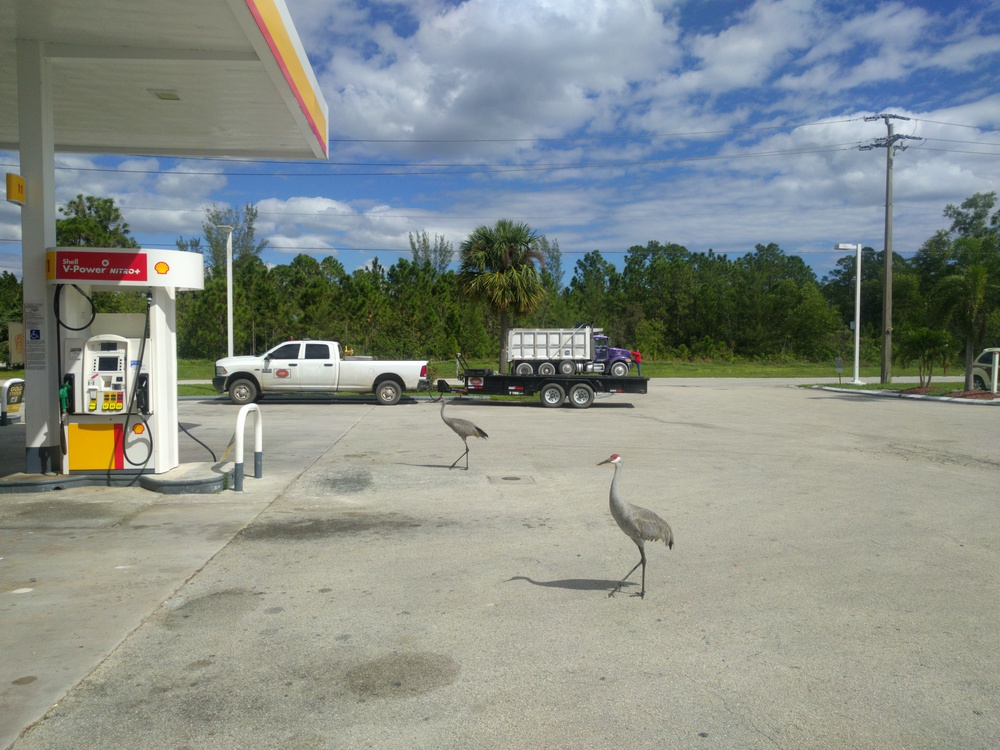 gasstationbirds-resized